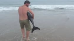Il sauve un dauphin échoué et devient un héros pour les