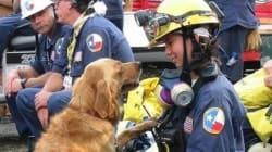 Muore l'ultimo cane eroe dell'11