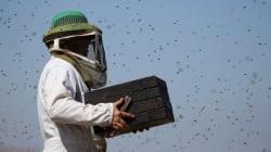 J'ai besoin de vous pour installer de nouvelles ruches et sauver les