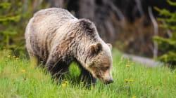 Pipeline Leak Spills 380,000 Litres Near Alberta Grizzly