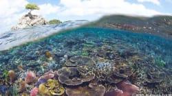 マレーシア最大の海洋公園が誕生