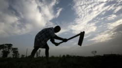 Unpaid For Months, Punjab Teachers Work As Farm And Construction Labourers To Make Ends