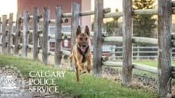 Calgary Cop Charged After Dog Escapes And Bites