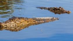 Garçon tué par un alligator: des photos d'enfants au même endroit en solidarité aux