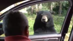 Cet ours terrifie une famille en ouvrant la porte de leur