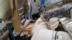 Hungry Black Bear Tears Apart Car In B.C. To Reach
