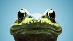 Une femme trouve des dizaines de grenouilles dans sa
