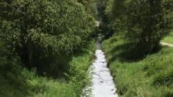 Un ruisseau rempli de bière a été découvert en