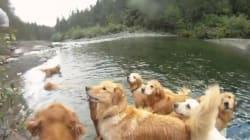 Nous avons besoin d'une sieste après avoir vu ces 13 chiens se baigner