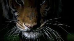 Ontario Zoo Accused Of Animal Cruelty To Shut