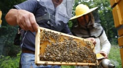 The Bee-Friendly Pesticide Alternative That Has Farmers