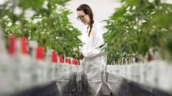 Canada's Largest Weed Manufacturer Goes