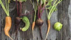 Dar uma chance para frutas e vegetais 'feios' nos fará cidadãos