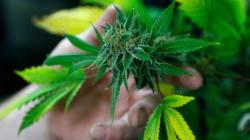 Usage et possession de marijuana: les médecins demandent un minimum de 21