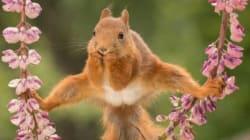 Cet écureuil vaut le
