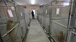 Abandon et euthanasie des animaux de compagnie, une barbarie de