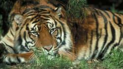 Espagne: une employée de zoo tuée par un