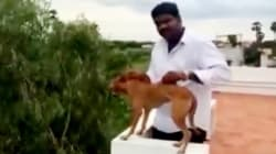 Man Seen In Disturbing Video Throwing Puppy Off A Roof Is A Medical Student From
