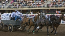 Chuckwagon Safety A Priority At This Year's Calgary