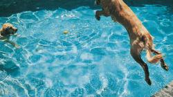 Ces animaux qui s'amusent dans l'eau sont adorables