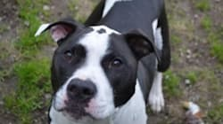 La gestion des chiens méchants en Alberta attire l'attention d'autres