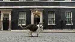 Cameron déménage, Larry le chat reste