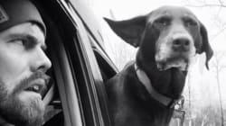 Il gesto di questo padrone per il suo cane è una dimostrazione