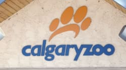 Calgary Zoo Sends Water For Testing After 200 Fish