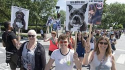 Montreal Dog Lovers Protest Pit Bull