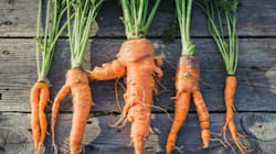 Des légumes moches, mais populaires