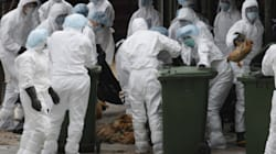 Deadly Bird Flu Strain Can't Spread Through Humans: