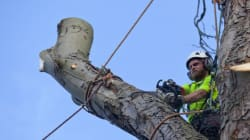 Edmonton Council Powers Up To Control Tree Removal On Your