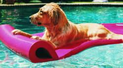 8 choses à savoir sur le coup de chaud et la baignade chez le