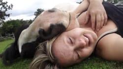 Faire la sieste avec un cheval, ce n'est pas de tout