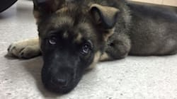 Teen Jailed After Tossing Puppy Into The Air And Letting It