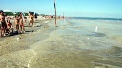 Alga tossica in Puglia provoca febbre e faringiti: allerta nel Barese e in