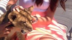 Un lionceau en vedette dans un club de