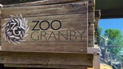 Une lionne s'en prend à une employée du Zoo de Granby