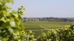 Les vignerons de Buxy, la Bourgogne à petit