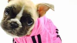 Le prêt-à-porter canin fait sa marque à Québec