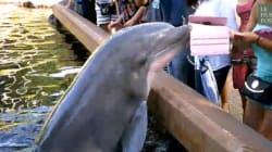Ce dauphin refuse qu'on le filme avec un