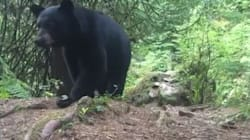 WATCH: Camper Comes Face-To-Face With Bear Poking At His