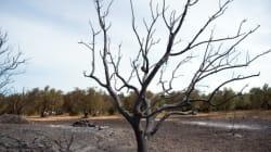 Après un incendie, comment la forêt se