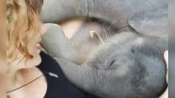 Ces adorables éléphanteaux vont vous faire