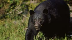 10-Year-Old B.C. Girl Critically Injured After Bear