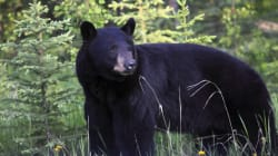 Bear Chases Hiker Along Popular North Vancouver