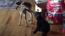 Baby Bear, Deer's New Friendship Is The Cutest