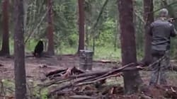 Alberta Pledges To Ban Spear Hunting After Bear's