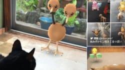 ポケモンの姿、ペットには見えているのか?【画像集】