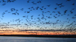 We Need To Work Together To Protect Migratory Bird